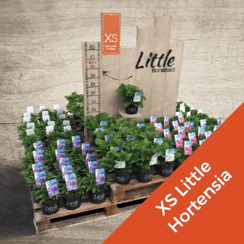 Little Hortensia webdesign